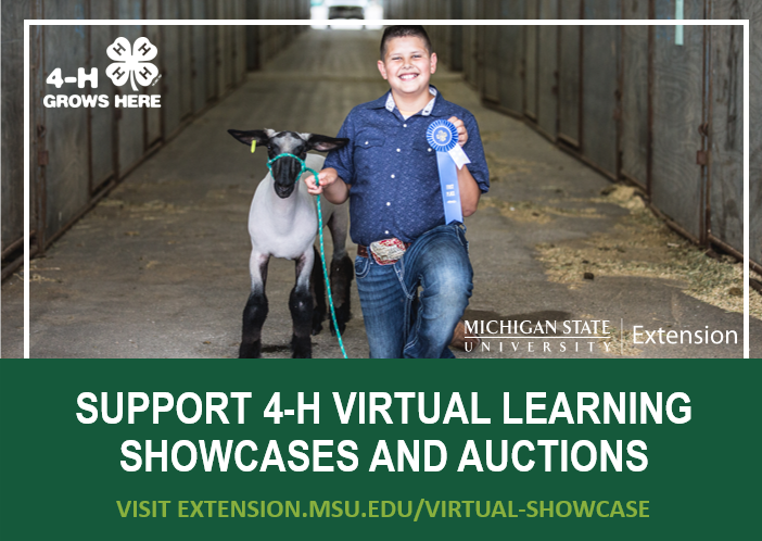 Support 4-H virtual learning showcases and auctions. Visit extension.msu.edu/virtualshowcase